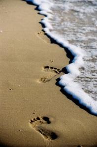 צעדים